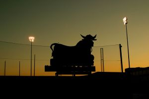 Bull With Lights